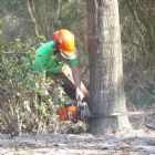 New Forestry, Chainsaw and Arboriculture Qualifications As from the 1st June 2013